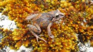 Schimbările climatice fac ravagii în lumea faunei sălbatice. Ce vietăţi au fost afectate