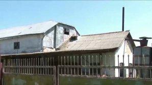 Pe urmele germanilor din Basarabia. Povestea morii din satul Bravicea (VIDEO)