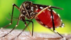 """Alertă de răspândire a """"super-malariei"""". Forma periculoasă a maladiei nu poate fi ucisă cu principalele medicamente anti-malarie"""