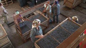 Un moldovean ambițios a dus fructele uscate dintr-un sat din Orhei în magazinele din Europa