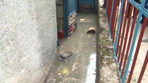 Subsolul unui bloc din Capitală, INUNDAT. Nivelul apei a ajuns la doi metri. Totul PLUTEŞTE ÎN AER