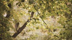 METEO 26 septembrie: O zi frumoasă de toamnă. Care vor fi maximele termice în toată ţara