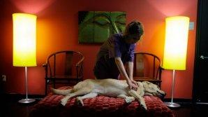 Paradis pentru animale! În Australia s-a deschis un hotel de 5 stele pentru acestea