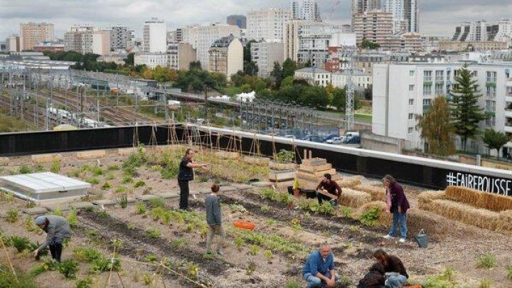 Proiectele ecologice în Franța au succes. Poștașii cultivă legume și cresc găini chiar pe acoperișul sediului Poștei din Paris