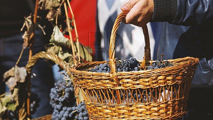 Șansă pentru Moldova: Producția viticolă, atât de proastă în Franța încât în Bordeaux se fură tone de struguri noaptea