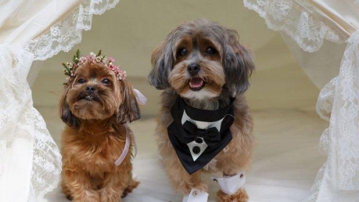 Nuntă de lux pentru doi căței. Stăpâna lor le-a organizat o petrecerea cum nu ai mai văzut (FOTO)