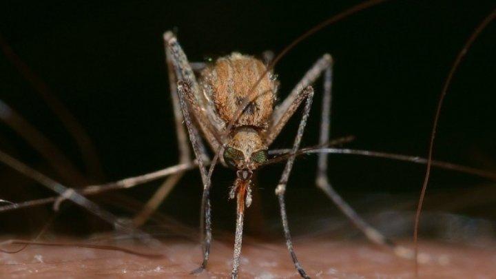 Un virus periculos face ravagii în România. Infecţia are simpomele unei viroze