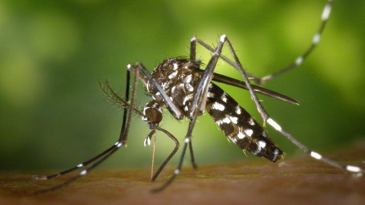 Virusul Zika face ravagii în India. Mai mult de 100 de oameni au fost infectaţi de la începutul lunii