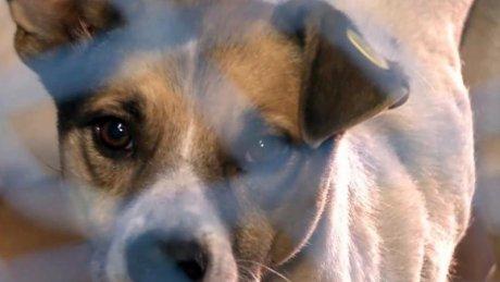Ce pedeapsă au primit doi bărbați care au ucis cu bestialitate un câine fără stăpân