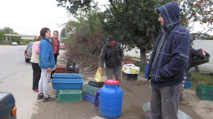 """Razii pe Calea Basarabiei. Un vânzător de peşte s-a prezentat drept """"poliţist"""", apoi s-a făcut nevăzut (FOTO)"""