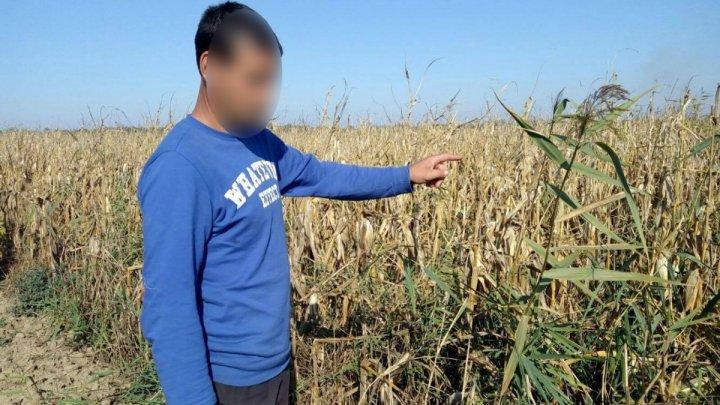 Prinşi în timp ce furau porumb. Persoane reţinute nu îşi justificau prezenţa în câmp
