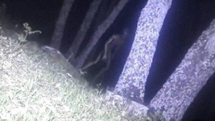 VIDEO care a speriat planeta! Oamenii legii din Argentina susțin că au surprins un extraterestu