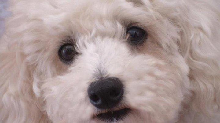Un câine buclucaș a dat peste cap traficul aerian de pe un aeroport din Tokyo