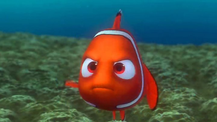 Specia renumitului pește Nemo, este în pericol. Care sunt motivele dispariției