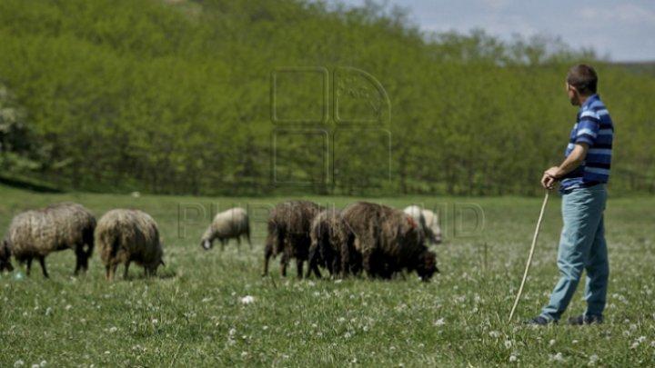 Crimă ÎNFIORĂTOARE! Doi ciobani români au fost uciși în Italia din cauza oilor
