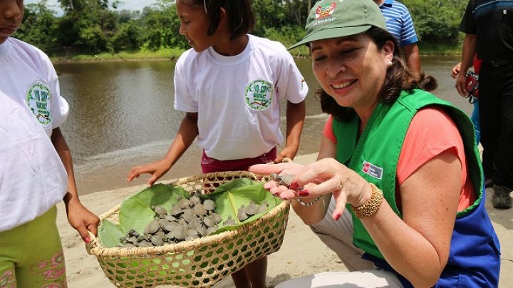 Cinci mii de ţestoase Taricaya, specie pe cale de dispariţie, au ajuns într-o zonă protejată din bazinul râului Amazon