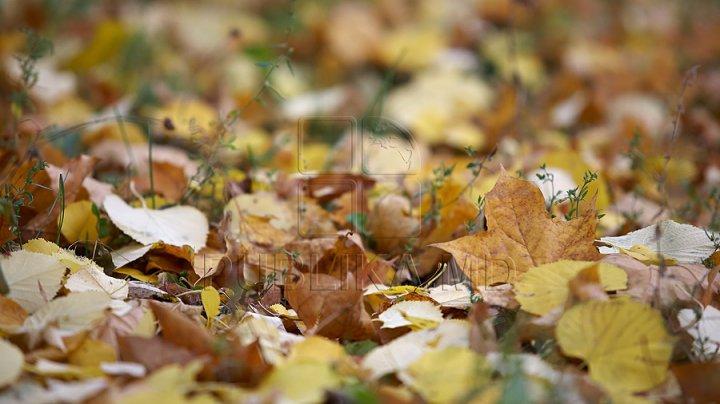 Spiritul gospodarului: între fum toxic şi curăţenie. Ce poți face cu frunzele căzute