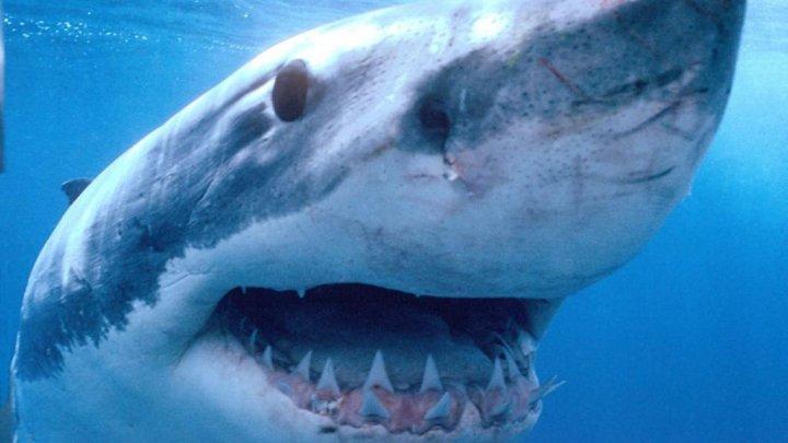Creatură parcă desprinsă dintr-un film de groază, rechin cu cap de șarpe și cu 300 de dinți (FOTO)