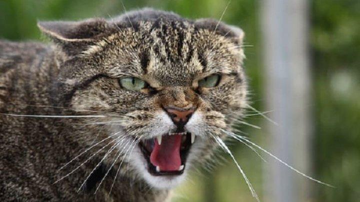CAZ BIZAR în Japonia! O pisică, principalul suspect într-o tentativă de omor