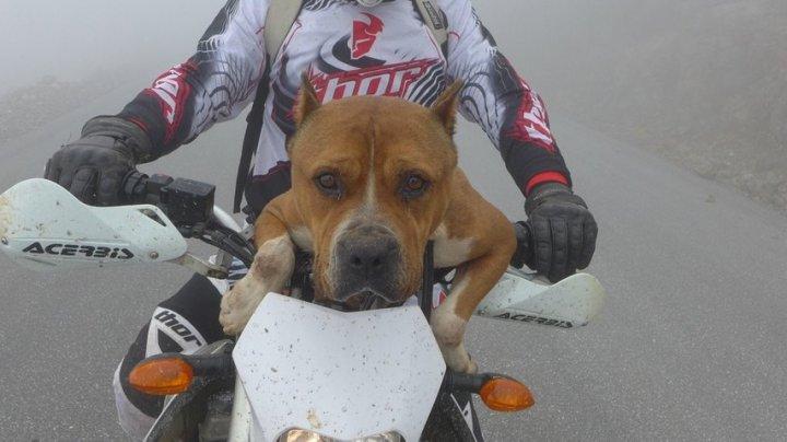 CEL MAI TARE PILOT DIN LUME. Căţelul Mayo urcă pe motocicletă fară nicio frică