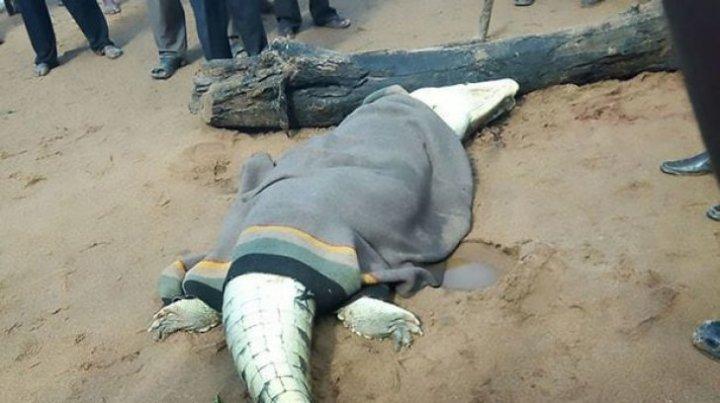 Caz ÎNFRICOȘĂTOR! În burta unui ANIMAL au fost găsite rămășițele unui copil de 8 ani (FOTO)
