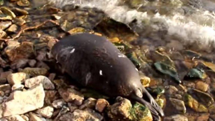 Caz alarmant! Peste 100 de foci din Lacul Baikal, găsite moarte. Care este cauza (VIDEO)