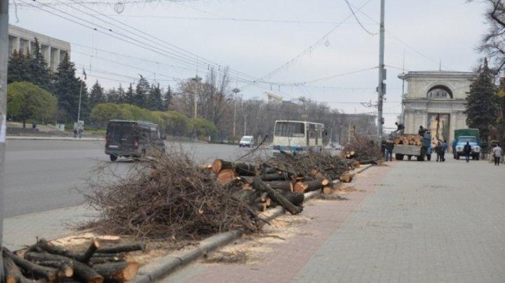ATENȚIE ȘOFERI! În Capitală se petrec lucrări de defrișare a arborilor. Care sunt străzile vizate