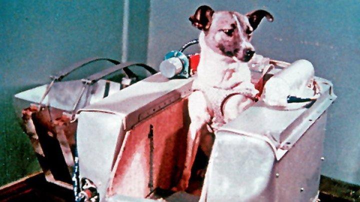 Cățelușa Laika a fost comemorată la 60 de ani după ce a fost trimisă în spațiu