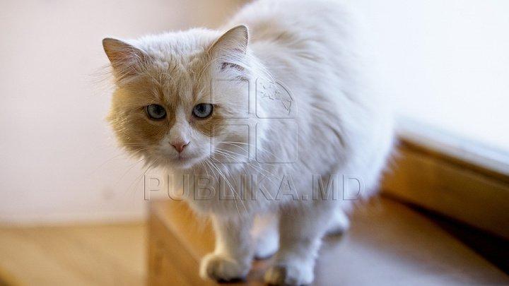 Bine de știut! Cum te avertizează pisica atunci când ai o entitate străină sau energii negative în casă