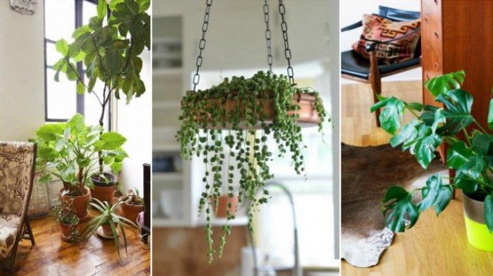 Trebuie să știi asta! Plantele care aduc NOROC în casa ta. Cum să atragi prosperitatea