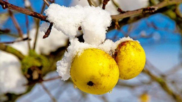 Soluţii simple ca să-ţi protejezi pomii tineri de ger, dar și împotriva micilor rozătoare