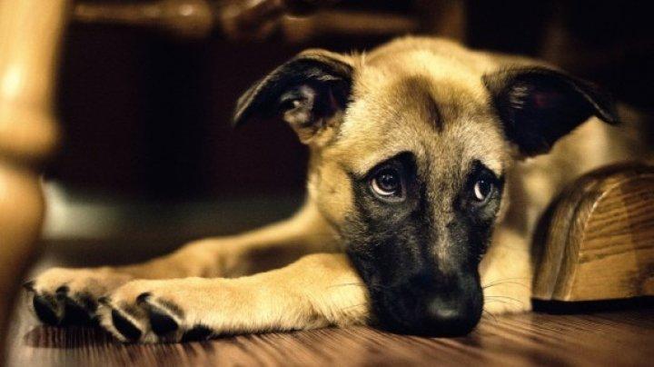 VIRAL PE INTERNET! A vrut să-şi abandoneze câinele într-o pădure. Ce a făcut căţeluşul la câteva minute a impresionat o lume întreagă (VIDEO)