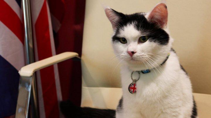 O pisică a devenit membru oficial al ambasadei Marii Britanii din Iordania (VIDEO)