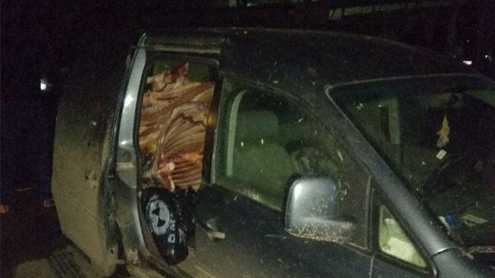 Jumătate de tonă de carne de porc, transportată în condiţii insalubre, urma să ajungă la Piaţa Centrală (FOTO)