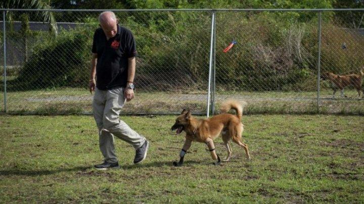 Un câine a primit o nouă şansă la o viaţă normală, după ce stăpânul i-a tăiat labele pentru că i-a ros încălţămintea