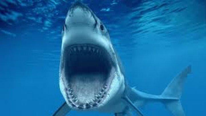 VIRAL PE INTERNET! Momentul în care un scafandru şi un rechin se întâlnesc