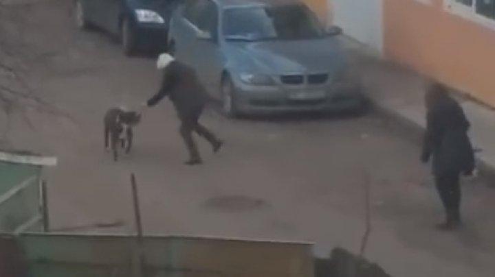 IMAGINI CUMPLITE la Iaşi! Doi câini au atacat trei persoane în stradă, unul dintre ei a rămas castrat (VIDEO)