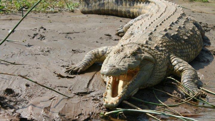 Crocodili şi pitoni, vânduţi pe internet. Şapte traficanţi de animale au fost arestaţi în Indonezia