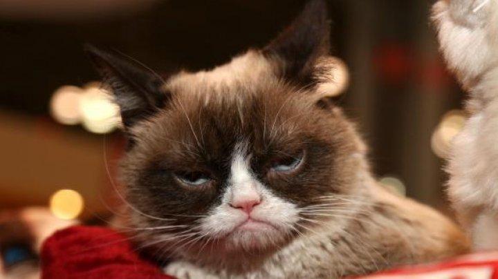 Cea mai faimoasă pisică din lume a dat lovitura. I-a adus proprietarei 710.000 de dolari în instanţă