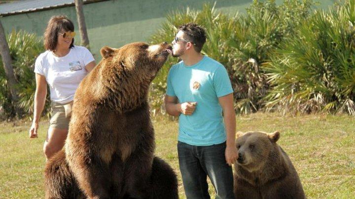 O familie trăiește alături de 14 urși care cresc în curtea casei şi cântăresc împreună peste 1.000 de kilograme.