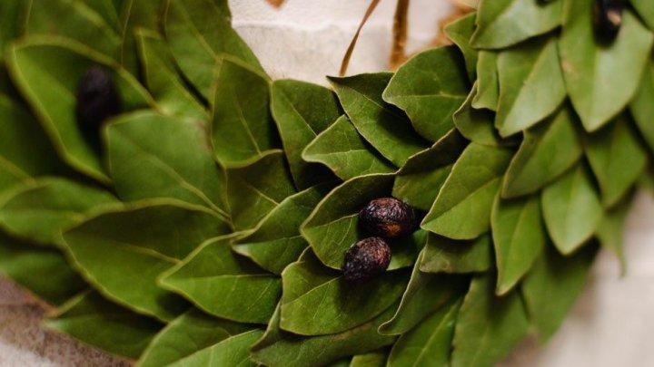 Efectul benefic al frunzelor de dafin. Ce poţi trata cu ele