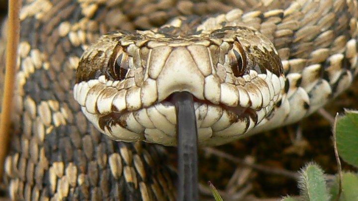 Un funcționar public din Nigeria, suspendat din funcție după ce a declarat că un șarpe a mâncat 100.000 de dolari