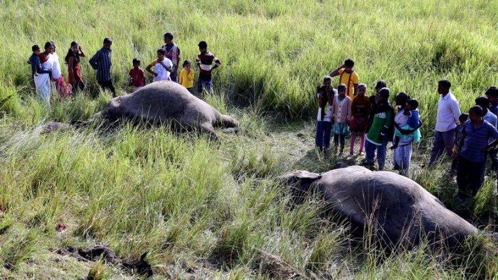 Patru elefanți aflaţi pe cale de dispariţie, uciși într-un accident feroviar în nord-estul Indiei