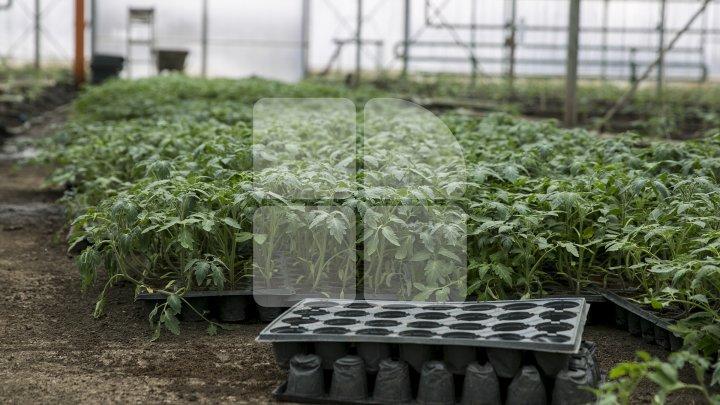 Veste bună pentru fermieri! AIPA a lansat programul de acordare a subvenţiilor în avans