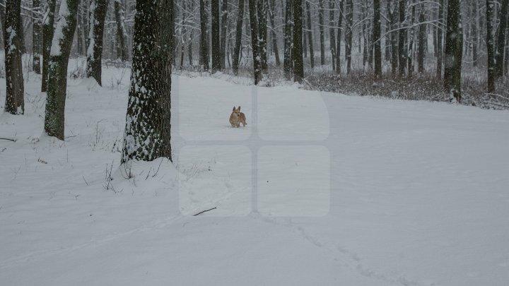 METEO 27 februarie: Ger năprasnic, va ninge şi izolat va viscoli. Câte grade vor indica termometrele