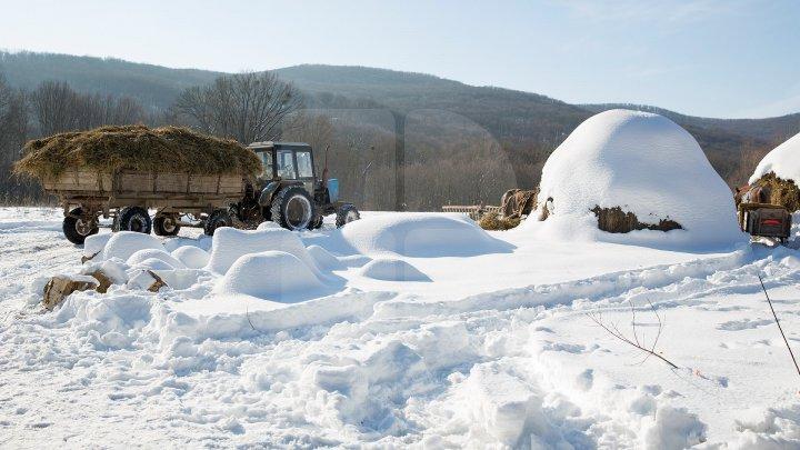Ai imagini frumoase cu zăpada care s-a aşternut peste localitatea ta sau cu drumuri blocate din cauza ninsorii? Trimite-le şi le vom face publice