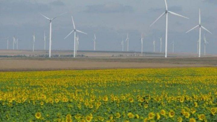 Olandezii construiesc cel de-al cincilea parc eolian din lume în România, în judeţul Buzău