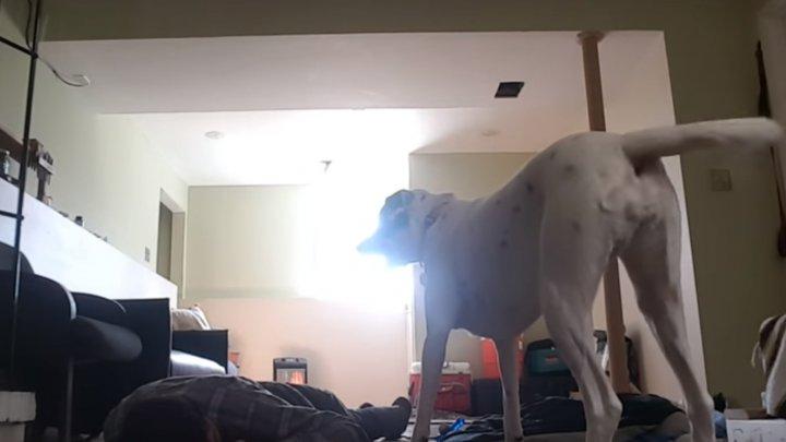 EMOȚIONANT! Reacția unui câine când a văzut că stăpânul său se simte rău și a leșinat (VIDEO)