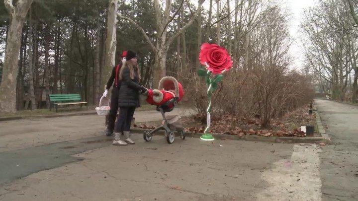 """În Parcul Valea Trandafirilor """"a răsărit"""" un trandafir GIGANT de Ziua Îndrăgostiţilor"""