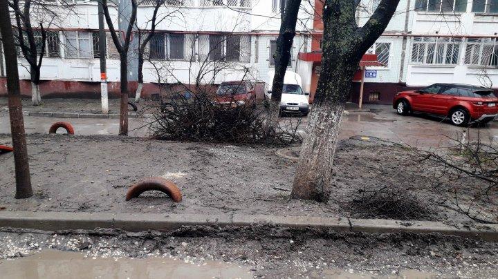 În Capitală a început MAREA CURĂŢENIE. Crengile copacilor uscaţi au fost tăiate (FOTO)